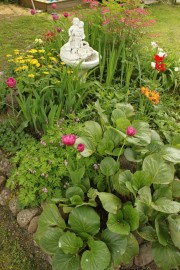 puutarha nettiin