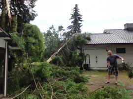 Sunnuntain ukkonen kaatoi Juha Mildin pihasta kuusen, mutta vain katon harjapelti vaatii korjausta. Kuva: Kalevi Hietanen