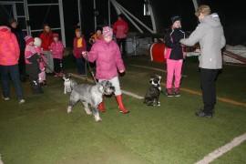 Laitilassa harjoiteltiin koirataitoja ja perehdyttiin koiranhoidon saloihin.