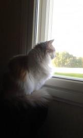 Tytti seuraa heppoja kaikkein mieluiten ikkunan takaa.