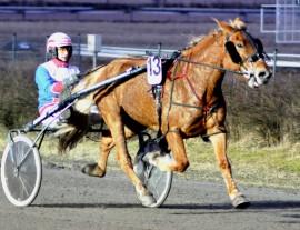 Laitilalainen Jere Kiveinen ohjastaa Joensuun kuninkuusraveissa reilun viikon kuluttua omistamaansa Suhhausta, joka on koko kuninkuusmittelöiden ainoa varsinaissuomalainen hevonen. Kuva: Rauli Ala-Karvia