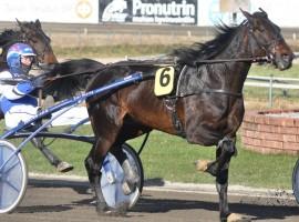 Laitilalaisen Pauli Heijarin kasvattama Prince Albert juoksi Vermossa ennätyksensä valmentajansa Pekka Korven ajamana.