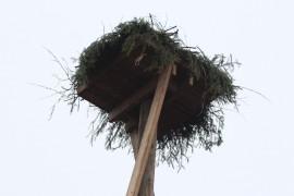 Pyhärannan Lahdenvainioon on pystytetty astetta  erikoisempi linnunpesä.