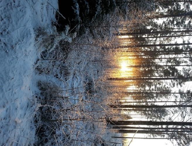 Henna Asikainen kuvasi maiseman Kivijärventiellä iltapäivälenkillä. Pakkasta 19,5 astetta.