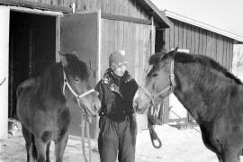Olli ja Flikka lähdössä ulos Brita Virtasen opastuksella. Kuva Merin hevostallilta Palttilasta. Laitilan Sanomat 13.3.