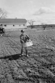 Kodisjoella järjestettiin kylvön siunaustilaisuus, jossa Simo Yli-Karro antoi näytteen vanhan ajan kylvömenetelmistä. Laitilan Sanomat 10.5.1996