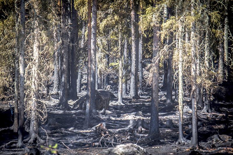 Pyhärannan metsäpalon näkymä 19. heinäkuuta. Kuva: Eero Saarikoski, TS.